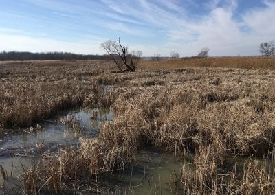 Maumee Bay State Park Wetland Reconnection